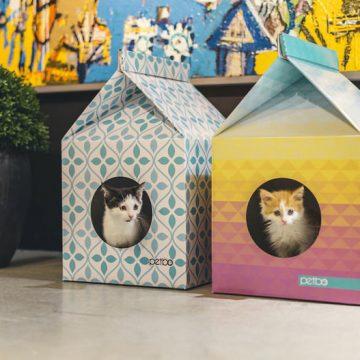 ハチワレ茶トラ白子猫箱入りの猫画像