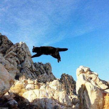 黒猫ジャンプの猫画像