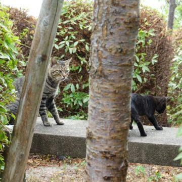 キジトラ黒猫の猫画像