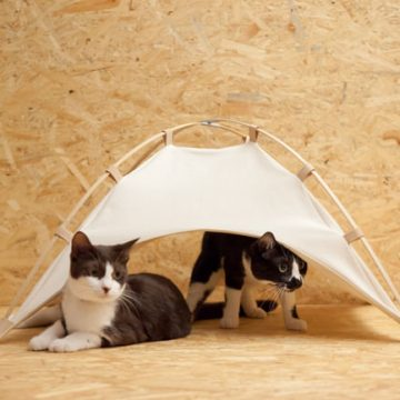 ハチワレ白黒ねこテントの猫画像