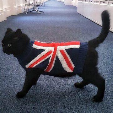 黒猫ユニオンジャック服の猫画像