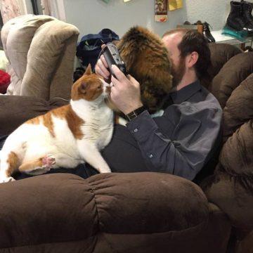 飼い主のゲームの邪魔するの猫画像