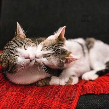 キジトラ白猫2匹の猫画像