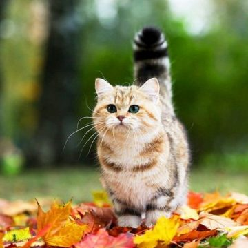 キジトラの猫画像