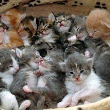 子猫たくさんの猫画像