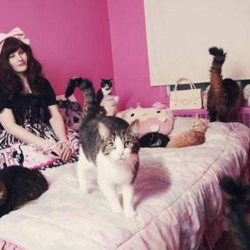 猫大量と飼い主の猫画像