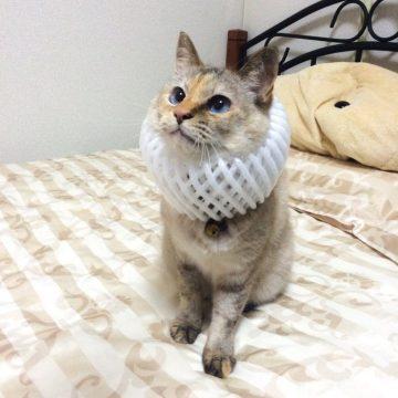 白サビの猫画像