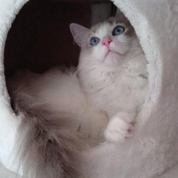 白猫キャットハウスの猫画像