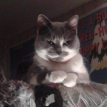 灰白見下ろすの猫画像