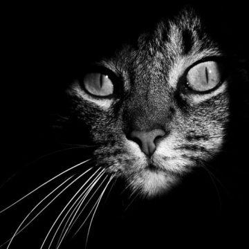 キジトラクールの猫画像
