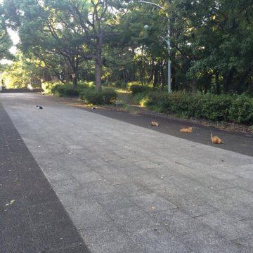 公園猫たくさんの猫画像