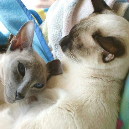 ポインテッド猫毛布