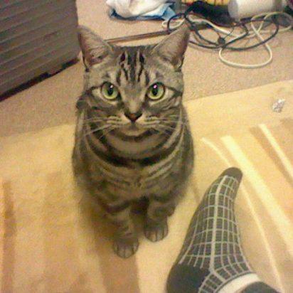 サバトラ猫カーペット
