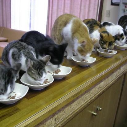 サバトラ白猫ハチワレ猫茶トラ白猫三毛猫とび三毛猫
