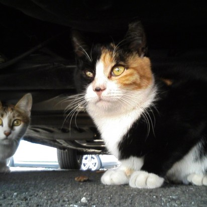 三毛猫とび三毛猫車
