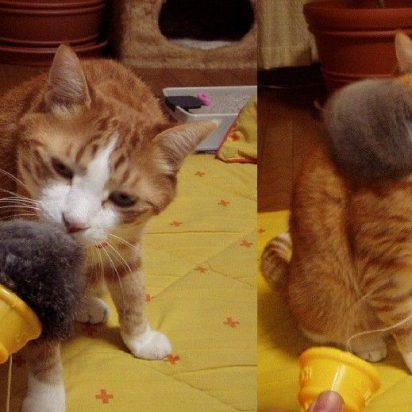 茶トラ白猫おもちゃ