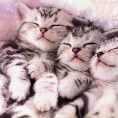 サバトラ猫子猫タオル