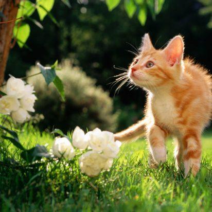 茶トラ猫子猫屋外