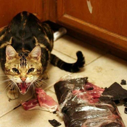 キジトラ猫肉威嚇