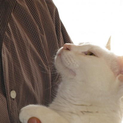 白猫抱っこ