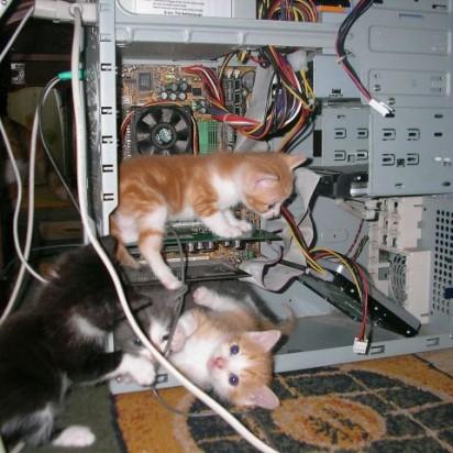 茶トラ白猫ハチワレ猫子猫パソコン