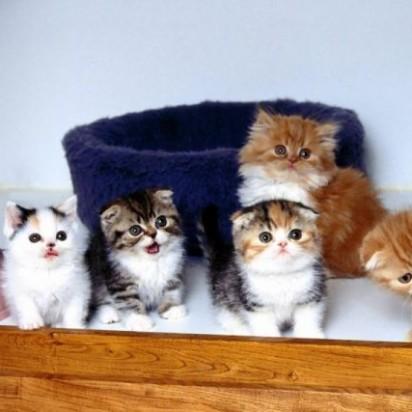 とび三毛猫キジトラ猫三毛猫茶トラ白猫茶トラ猫子猫
