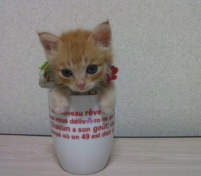 茶トラ猫子猫コップ