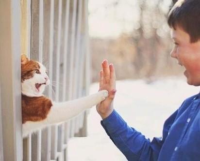 茶トラ白猫握手