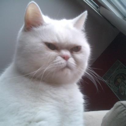 白猫ブサイク