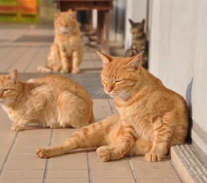 茶トラ猫キジトラ猫屋外