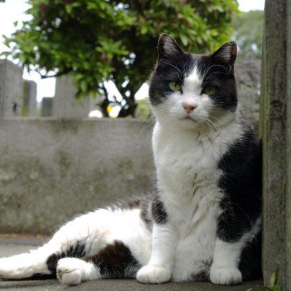 ハチワレ猫墓地