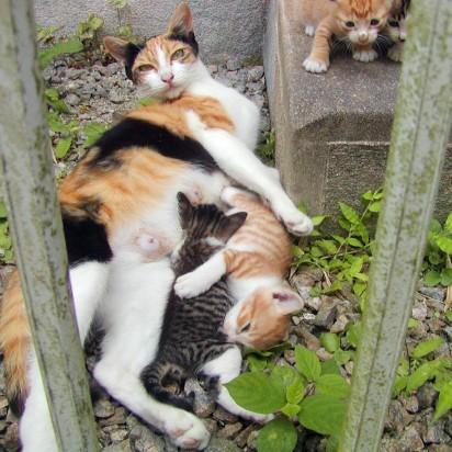 三毛猫キジトラ猫茶トラ白猫キジトラ白猫子猫