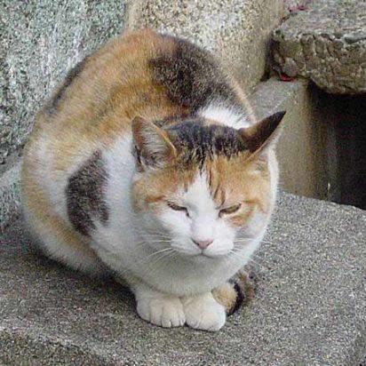 三毛猫屋外