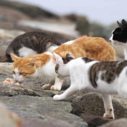 茶トラ白猫キジトラ白猫ハチワレ猫屋外