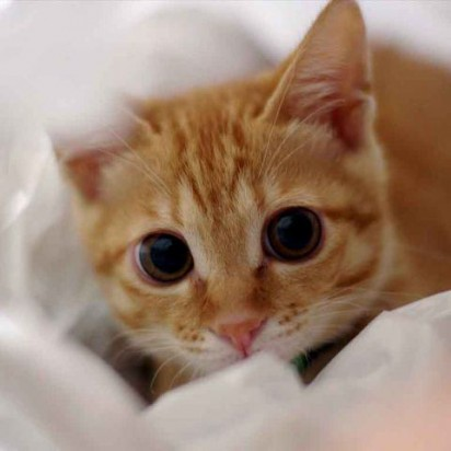 茶トラ猫子猫布団