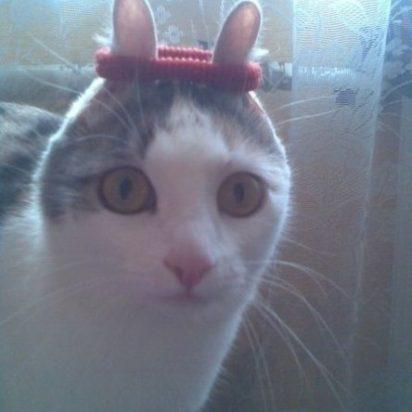 サバトラ白猫ゴム