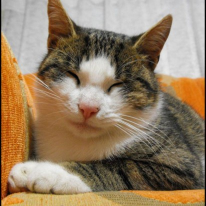 キジトラ白猫昼寝ソファー