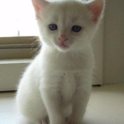 白猫子猫屋内