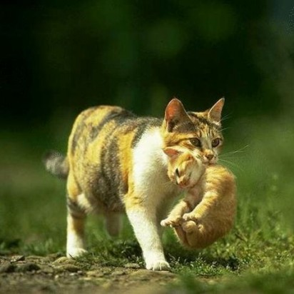 三毛猫茶トラ猫子猫親子