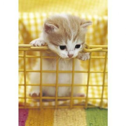 茶トラ白猫子猫カゴ