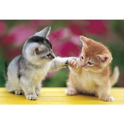 サバトラ白猫茶トラ白猫子猫