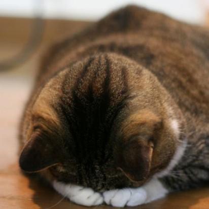 キジトラ猫昼寝