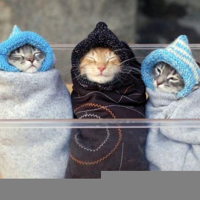 サバトラ猫茶トラ猫子猫服