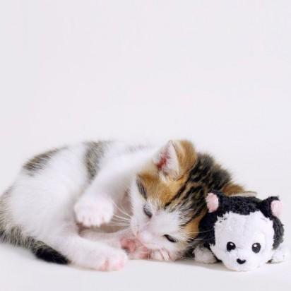 キジトラ白猫子猫ぬいぐるみ