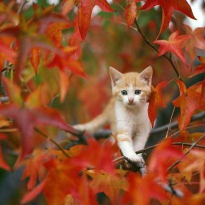 茶トラ白猫子猫紅葉