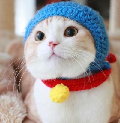 茶トラ白猫ドラえもん仕様