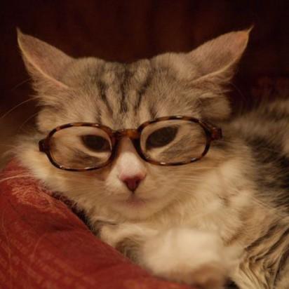 サバトラ猫メガネ