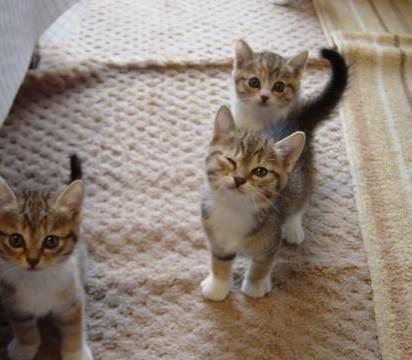 キジトラ白猫子猫ウインク
