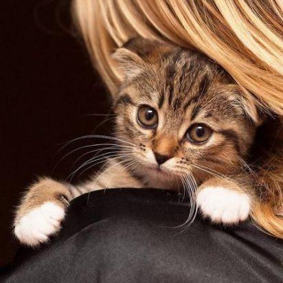 キジトラ猫子猫金髪