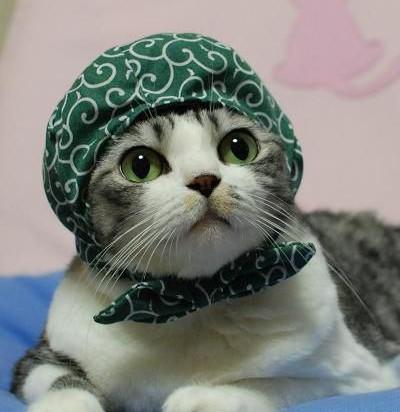 サバトラ白猫子猫泥棒